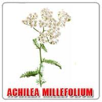 achilea